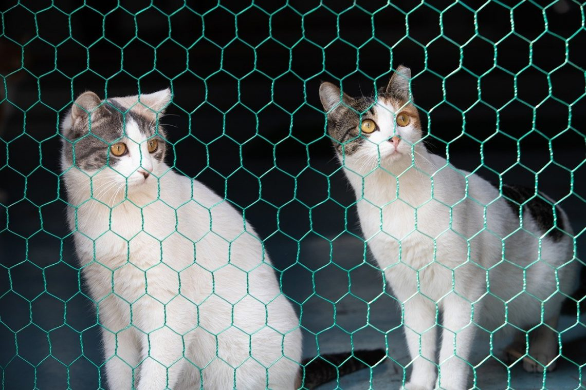 cage trappe chat
